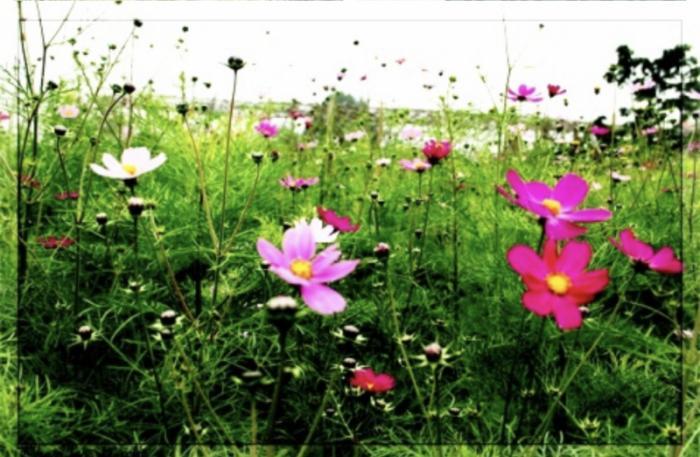 top 19 bai tho hay cua nha tho dang quoc khanh 2 - Top 19 Bài thơ hay của nhà thơ Đặng Quốc Khanh