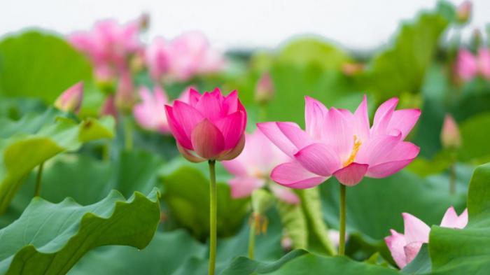 top 20 bai tho hay cua nha tho lan vuong 36 - Top 20 Bài thơ hay của nhà thơ Lan Vương