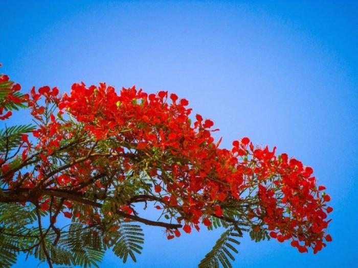 top 20 bai tho hay ve cac loai hoa thang tu 12 - Top 20 Bài thơ hay về các loài hoa tháng tư