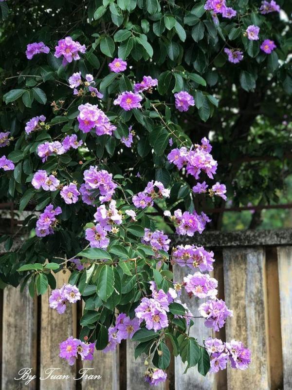 top 20 bai tho hay ve cac loai hoa thang tu 17 - Top 20 Bài thơ hay về các loài hoa tháng tư