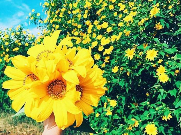 top 20 bai tho hay ve cac loai hoa thang tu 18 - Top 20 Bài thơ hay về các loài hoa tháng tư