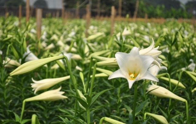 top 20 bai tho hay ve cac loai hoa thang tu 6 - Top 20 Bài thơ hay về các loài hoa tháng tư