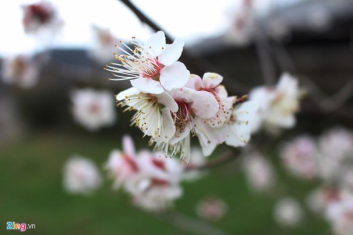 top 20 bai tho hay ve cac loai hoa thang tu 8 - Top 20 Bài thơ hay về các loài hoa tháng tư
