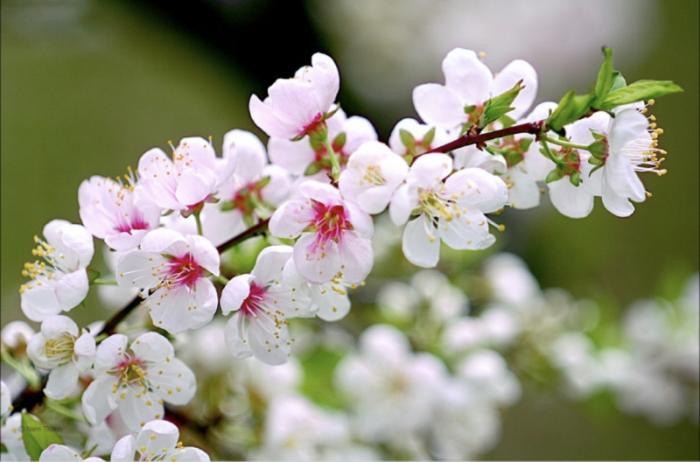 top 20 bai tho hay ve cac loai hoa thang tu 9 - Top 20 Bài thơ hay về các loài hoa tháng tư
