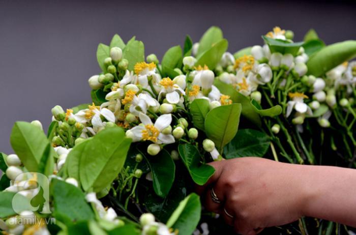 top 20 bai tho hay ve cac mua hoa thang ba 10 - Top 20 Bài thơ hay về các mùa hoa tháng ba