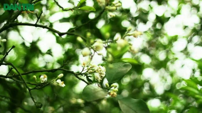 top 20 bai tho hay ve cac mua hoa thang ba 11 - Top 20 Bài thơ hay về các mùa hoa tháng ba