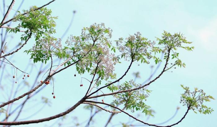 top 20 bai tho hay ve cac mua hoa thang ba 13 - Top 20 Bài thơ hay về các mùa hoa tháng ba