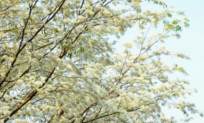 top 20 bai tho hay ve cac mua hoa thang ba 2 - Top 20 Bài thơ hay về các mùa hoa tháng ba