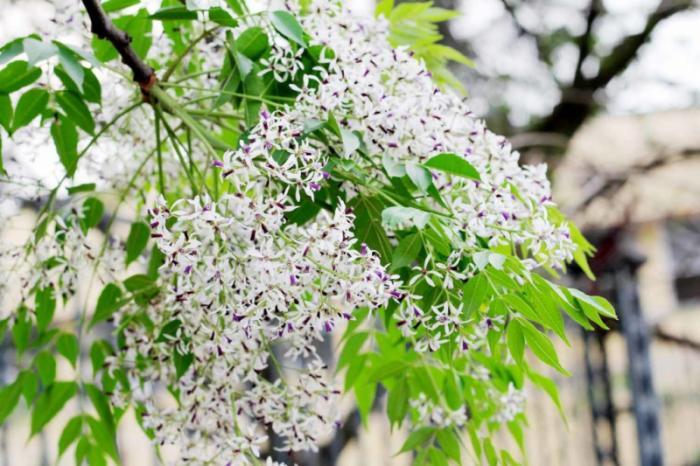 top 20 bai tho hay ve cac mua hoa thang ba 4 - Top 20 Bài thơ hay về các mùa hoa tháng ba