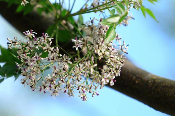 top 20 bai tho hay ve cac mua hoa thang ba 5 - Top 20 Bài thơ hay về các mùa hoa tháng ba