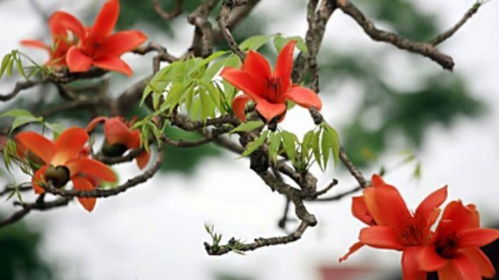top 20 bai tho hay ve mua hoa gao thang ba 1 - Top 20 Bài thơ hay về mùa hoa gạo tháng ba