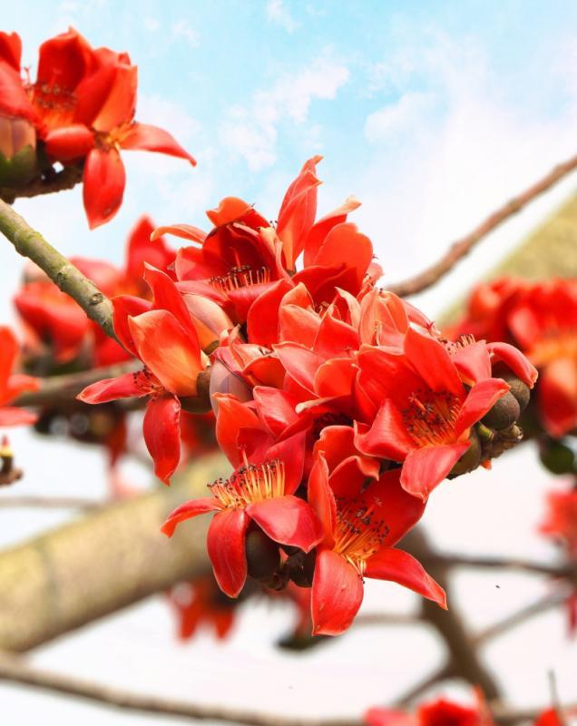 top 20 bai tho hay ve mua hoa gao thang ba 12 - Top 20 Bài thơ hay về mùa hoa gạo tháng ba