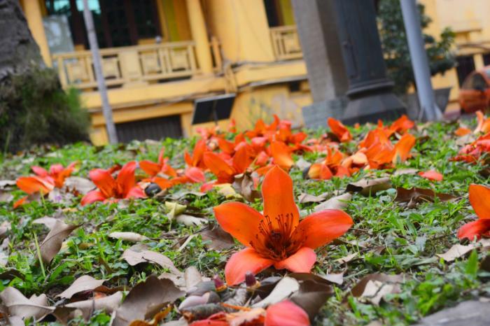 top 20 bai tho hay ve mua hoa gao thang ba 14 - Top 20 Bài thơ hay về mùa hoa gạo tháng ba