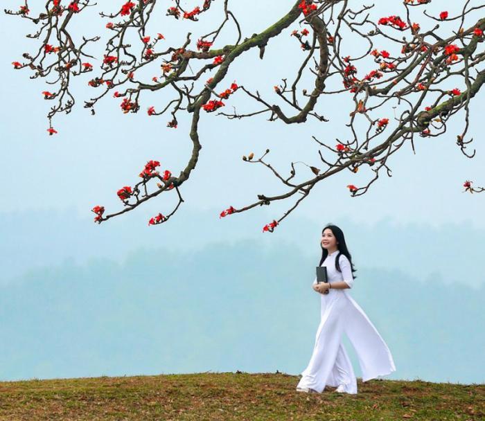 top 20 bai tho hay ve mua hoa gao thang ba 6 - Top 20 Bài thơ hay về mùa hoa gạo tháng ba