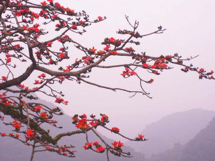top 20 bai tho hay ve mua hoa gao thang ba 7 - Top 20 Bài thơ hay về mùa hoa gạo tháng ba