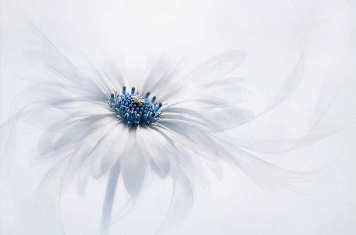 top 20 bai tho hay ve phat giao 16 - Top 20 Bài thơ hay về Phật giáo