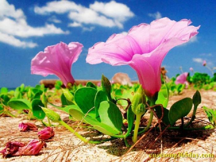 top 20 bai tho hay ve thang 7 8 - Top 20 Bài thơ hay về tháng 7