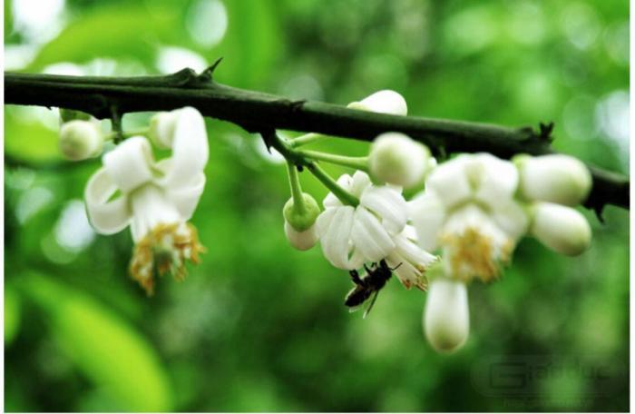 top 20 bai tho hay ve thang ba cua tac gia hoang minh tuan 12 - Top 20 Bài thơ hay về tháng ba của tác giả Hoàng Minh Tuấn