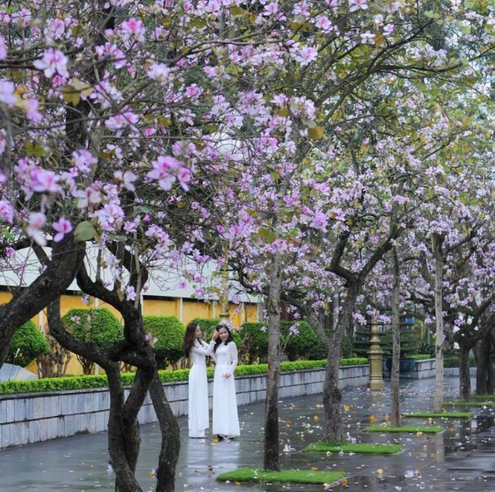 top 20 bai tho hay ve thang ba cua tac gia hoang minh tuan 2 - Top 20 Bài thơ hay về tháng ba của tác giả Hoàng Minh Tuấn