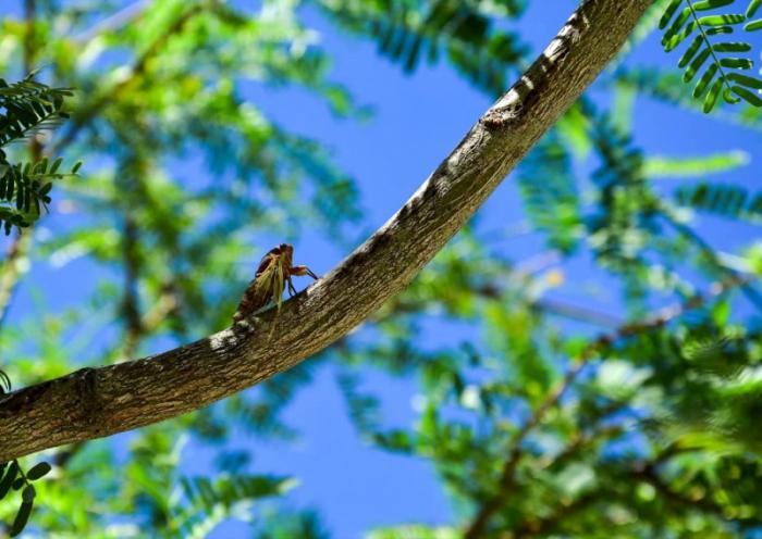 top 20 bai tho hay viet ve cac loai hoa mua ha 12 - Top 20 Bài thơ hay viết về các loài hoa mùa hạ