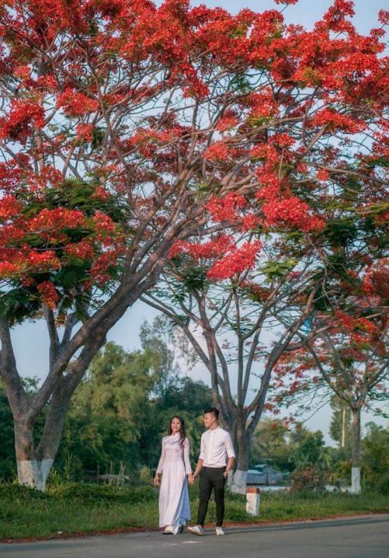 top 20 bai tho hay viet ve cac loai hoa mua ha 16 - Top 20 Bài thơ hay viết về các loài hoa mùa hạ