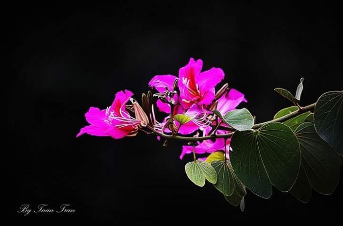 top 20 bai tho hay viet ve cac loai hoa mua ha 19 - Top 20 Bài thơ hay viết về các loài hoa mùa hạ