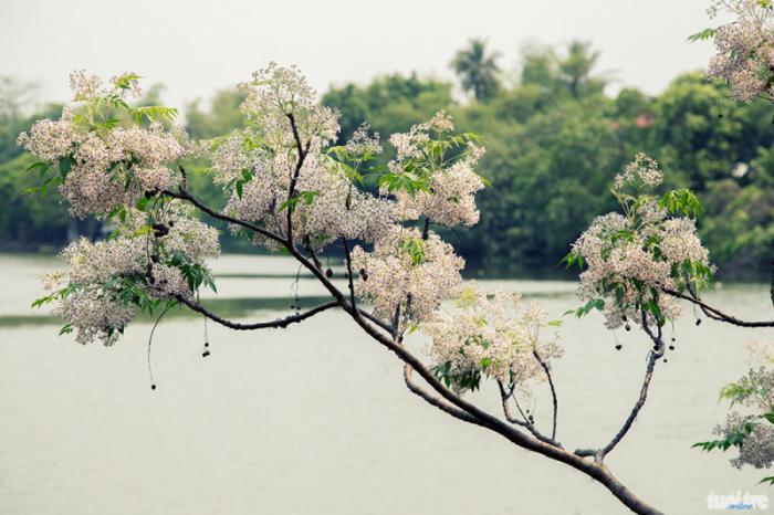 top 20 bai tho hay viet ve khoanh khac giao mua xuan ha 1 - Top 20 Bài thơ hay viết về khoảnh khắc giao mùa xuân hạ