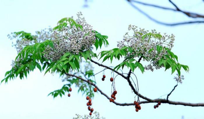 top 20 bai tho hay viet ve khoanh khac giao mua xuan ha 11 - Top 20 Bài thơ hay viết về khoảnh khắc giao mùa xuân hạ