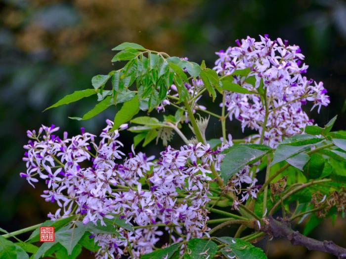 top 20 bai tho hay viet ve khoanh khac giao mua xuan ha 5 - Top 20 Bài thơ hay viết về khoảnh khắc giao mùa xuân hạ