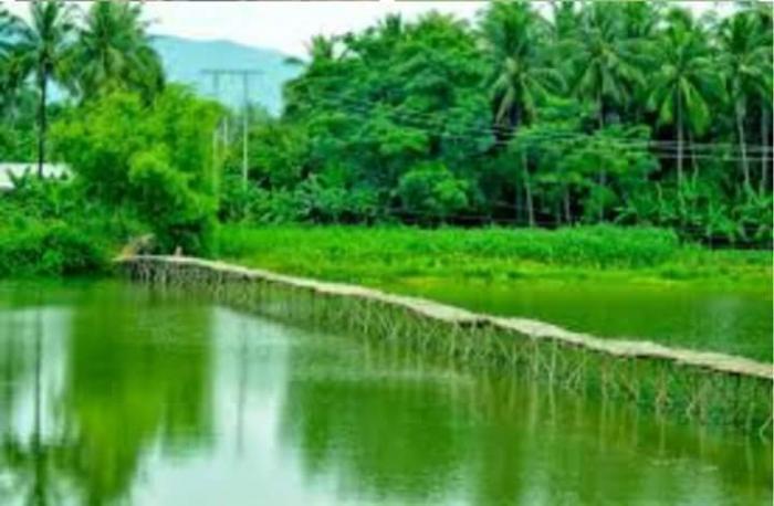 top 23 bai tho hay mung que huong dat nuoc doi moi 34 - Top 23 Bài thơ hay mừng quê hương đất nước đổi mới