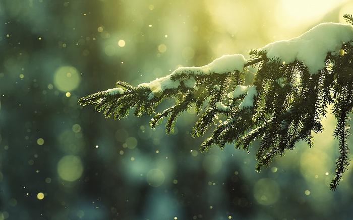 top 34 bai tho hay viet ve thang 12 25 - Top 34 Bài thơ hay viết về tháng 12