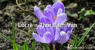 Lỗi rẽ – Thái Bạch Vân